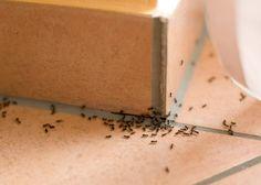 Heb je last van mieren in huis? Met dit onverwachte product reken je er mee af!