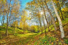 autumn landscape by laurentiu iordache on The Great Escape, The Way Home, Photography Tutorials, Image Photography, Restoration, Sunrise, Beautiful Pictures, Country Roads, Ocean