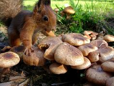 Magical Mushrooms! - I found them first. They are MINE !!! :D Squirrel Hunt - Helsinki, Finlande méridionale