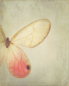 Wings - 8 x 10 Fine Art Photograph - dreamy pink vintage style butterfly home decor print