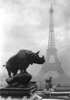 Rhinoceros and Terrace of the Palais du Trocadero c. 1920s byYvon