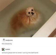 And this ~unusual~ bath bomb.   18 Dogs On Tumblr Who Are Almost Too Perfect To Be Real