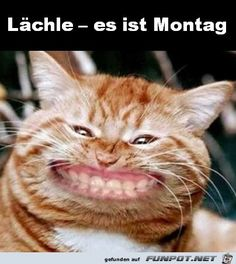 jpg - Eine von Dateien in der Kategorie & # - Montag - Humor Bilder Angry Cat Memes, Funny Animal Memes, Funny Animal Videos, Funny Cats, Funny Animals, Animal Captions, Funny Animal Photos, Funny Animal Pictures, Cute Baby Animals