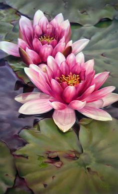 Flores de lotus flowers in a pond or lake. Very realistic looking! Art Floral, Watercolor Flowers, Watercolor Paintings, Drawing Flowers, Lotus Drawing, Lotus Painting, Lotus Flower Paintings, Water Lilies Painting, Chalk Painting
