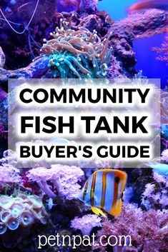 Here are the best types of community fish tank fish for freshwater and saltwater aquariums. Find out the best tanks for community fish and. Best Aquarium Fish, Aquarium Stand, Aquarium Design, Aquarium Ideas, Animal Quotes, Animal Memes, Community Fish Tank, Fish Tank Themes, Animals For Kids