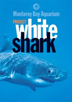Project White Shark