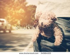 Travel or journey concept. Brown teddy bear doll in a man a??s blue jeans pocket at country road with light. Photo in vintage style. - stock photo