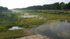 Odra river