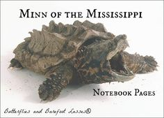 ugliest turtle I have ever seen.the Alligator snapping turtle Kinds Of Turtles, Sea Turtles, Paddle To The Sea, Alligator Snapping Turtle, Baby Alligator, Amazing Beasts, World Turtle Day, Us Geography, Species Extinction