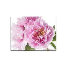 Blumenbild auf Leinwand, Fototapete oder Kunstdruck: Pfingstrosenglück mit Lilly & Leo