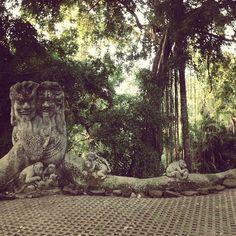 monkey forest. Ubud, Bali
