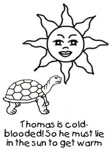 Free fun facts about tortoises coloring pages from our Tortoises