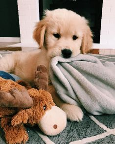 Golden Retriever Funny Fun With Your Your Golden Retriever Golden Retriever Funny Fun With Your Your Golden Retriever Cute Little Animals, Cute Funny Animals, Cute Pets, Adorable Dogs, Cute Dogs And Puppies, Doggies, Cute Puppy Pics, Puppies Puppies, Cutest Dogs