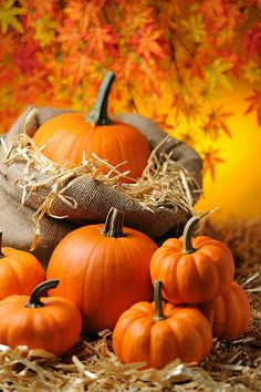 Fall Images, Fall Pictures, Fall Photos, Thanksgiving Wallpaper, Fall Background, Autumn Scenes, Fall Wallpaper, October Wallpaper, Autumn Aesthetic