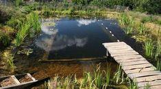 idee cantiere paesaggistico con stagni naturali per il nuoto