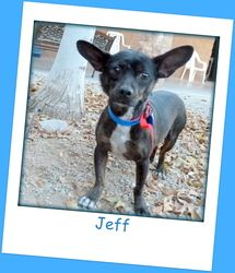 Jeff is an adoptable Chihuahua Dog in Glendale, AZ. Hello, my name is Jeff! I came to this shelter as a transfer from another shelter bec. Chihuahua Dogs, Puppies, Dog Names Male, Skye Terrier, Puppy Mills, Take Me Home, Small Dog Breeds, Looking For Love, Rainbow Bridge