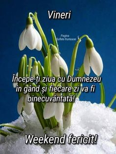 Happy Weekend, Qoutes, Calendar, Facebook, Mariana, Rome, Quotations, Quotes, Quote