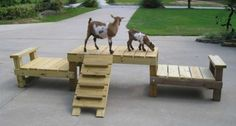 goat play ground... looks like Lorene's new one!