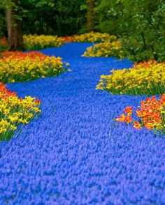 dominant blue flowers with yellow and orange flowers flowing around the blue one. dominant blue flowers with yellow and orange flowers flowing around the blue one… dominant blue flowers with yellow and orange flowers flowing around the blue ones Love Flowers, Beautiful Flowers, Beautiful Places, Orange Flowers, Blue Tulips, Bulb Flowers, Blooming Flowers, Faux Flowers, Small Flowers