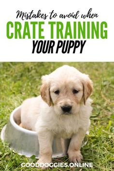 Crate training your puppy or adult dog can be one of the best things you can do for your dog. Especially if they are restless at night or suffer from separation anxiety. Check out these great tips to help you out.