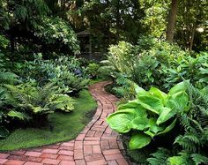 A shade garden pathway. The brick work, the neat, but interesting leaf color and texture. Garden Shrubs, Shade Garden, Lawn And Garden, Garden Beds, Garden Landscaping, Garden Path, Backyard Shade, Landscaping Ideas, Landscape Design