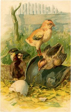 Vintage Hatching Chicks Image (The Graphics Fairy) Vintage Farm, Vintage Easter, Vintage Ephemera, Vintage Stuff, Chicken Images, Chicken Pictures, Vintage Chicken Art, Vintage Travel Themes, Farm Images