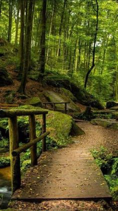 Outdoors Discover Forest path in Germany by Bobby Gonz (V) Nature Pictures Cool Pictures Beautiful Pictures Beautiful World Beautiful Places Forest Path Magic Forest Walk In The Woods All Nature Nature Pictures, Cool Pictures, Beautiful Pictures, Beautiful World, Beautiful Places, Natur Wallpaper, Forest Path, Forest Trail, Magic Forest