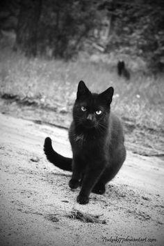 black cat II by tsubaki77