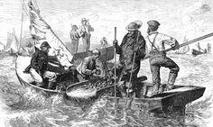 Hvor mye liv var det egentlig i Nordsjøen?