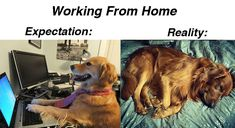 Work From Home Memes - StayHipp Work Jokes, Work Humor, Working From Home Meme, Original Memes, Commute To Work, On The Bright Side, Education Humor, Daily Activities, Make Time