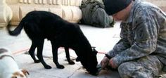 My Brother Died as a Soldier in Iraq. I brought his dogs home as a way to heal from Peter's death.