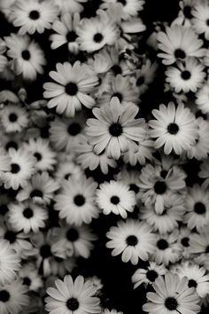Flores preto e branco para ...