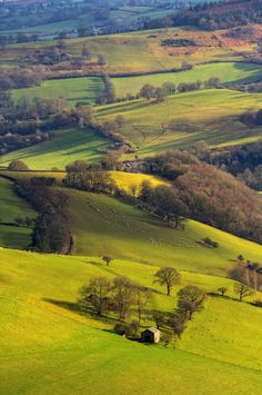 Herefordshire, England by Natasha Bridges