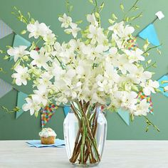 Search for white dendrobium birthday orchids