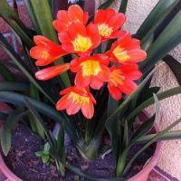 Už  máte přesazeny pokojovky? Pokud ne, měli byste si pospíšit, za chvíli nastane čas jejich letnění… Plants, Decor, Decoration, Planters, Decorating, Deco, Embellishments, Plant, Planting