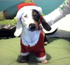 Santa Dox is coming to town!