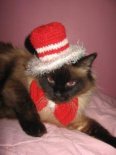 Cat in a hat Crocheted set for your cat Set crosetat pentru pisici mici si dragalase