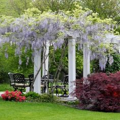 Pergolas Design Ideas, Pictures, Remodel and Decor. Pergola covered in Wisteria.