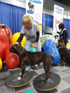 Rose City Classic 2013 - fitpawsusa.com ; dog fitness ; dog exercise ; canine physical therapy rehabilitation