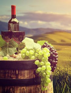 How is wine even made anyway? Even though we are quite sure you won't leave this article and go make your own wine, it's still a fun and educational process Italian Vineyard, Make Your Own Wine, Wine Painting, Cambodia Travel, Background Pictures, Coffee Love, Mendoza, Wine Cellar, Liquor