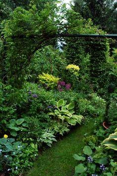 eda86f389abca5 Shade garden Perennials, Perennial Grasses, Hosta Plants, Garden Paths,  Garden Landscaping,