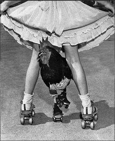 """li deien """"el pollo patinador"""""""