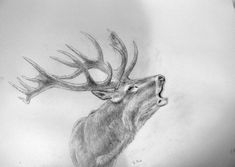 Geweihträger – Jagdmaler Thomas Bold Pencil Art Drawings, Animal Drawings, Cool Drawings, Art Sketches, Jäger Tattoo, Deer Drawing, Detailed Coloring Pages, Skull Art, Moose Art