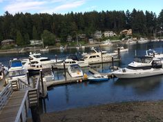 Green Turtle restaurant in Gig Harbor, WA