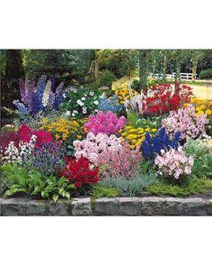 Collection 50 plantes vivaces assorties - Pour environ 6 m² - Jardin