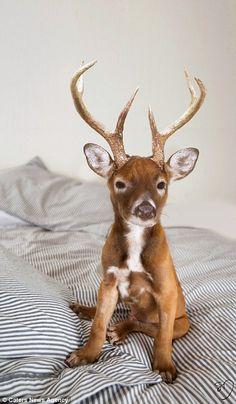 The Deer Puppy
