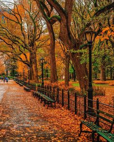 beautiful photos of fall in NYC – Best Autumn in New York images Fall Pictures, Fall Photos, Beautiful Places, Beautiful Pictures, Autumn In New York, Autumn Aesthetic, Autumn Scenery, Autumn Photography, Cityscape Photography