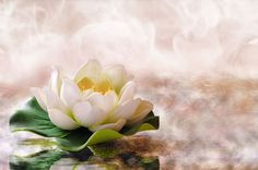 Water lily floating in warm water Photos Water lily floating in warm water. Spa, relaxation, meditation and health concept. Horizontal compos by Davizro's Market Prayer For Today, My Prayer, World Of Chaos, Business Card Design, Business Cards, Unity, Healing, Warm, Relaxation Meditation
