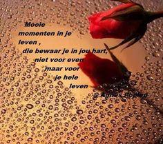mooie momenten spreuken 19 beste afbeeldingen van spreuken   Dutch quotes, Frases en Lyrics mooie momenten spreuken