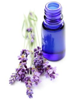 Tips for using lavender essential oil in herbal medicine and in aromatherapy. Lavender is one of the most useful of all essential oils. Lavender essential oil can be used daily to treat everything from headaches to bug bites. Essential Oils For Hair, Organic Essential Oils, Natural Remedies For Insomnia, Potpourri, Lavender Oil, French Lavender, Diy Candles, Homemade Candles, Candle Making